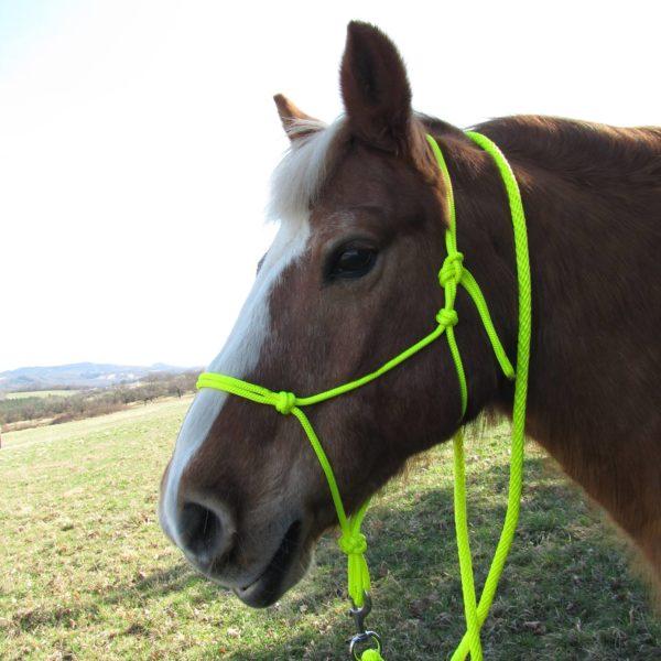 Idolo Neon Coloured Horse Pressure Halters
